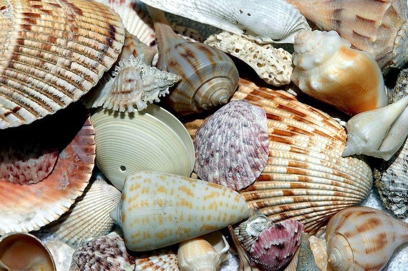 shells generic